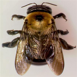 How To Get Rid Of Carpenter Bees 4 Steps