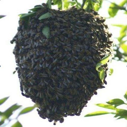 how to get rid of beehive organically