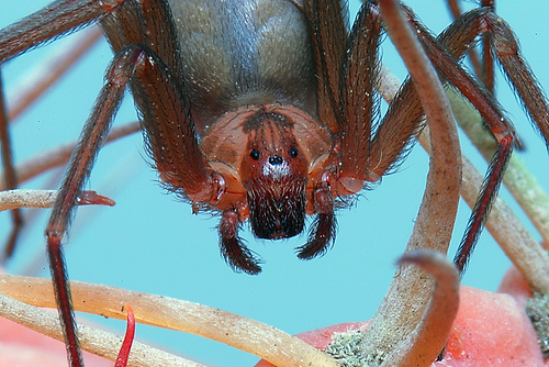 How To Identify Poisonous Spiders