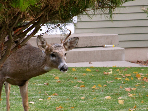 Keep Deer And Other Animals Out Of Your Garden