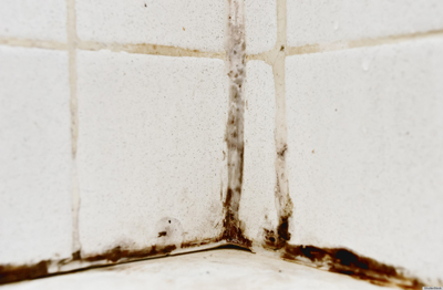 bathtub mold