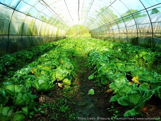 How Industrial Farming Is Affecting Our Environment