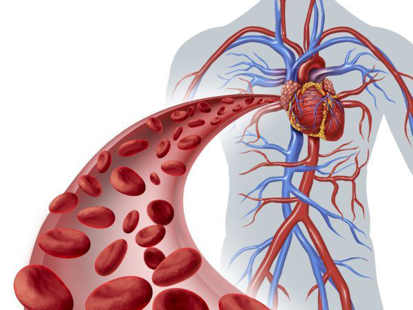 Good For Your Blood And Circulation