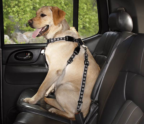 Pets-while-drive