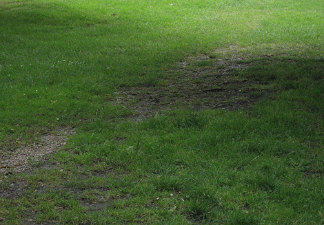Bald Spots in Your Lawn