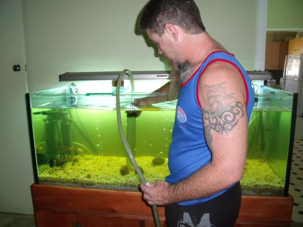 cleaning aquarium