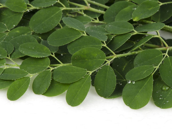 Drumstick Leaves