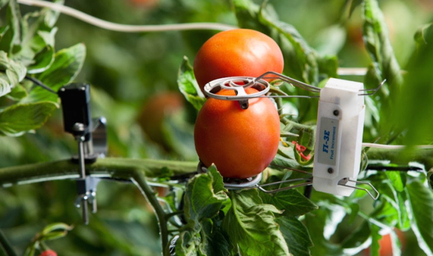 IoT for Better Crops