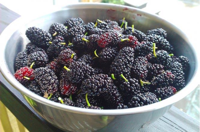 Mulberries (Shahtoot in Hindi)